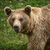 Homme · noir · ours · Homme · mère - photo stock © lightpoet