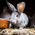 cute rabbit popping out of a hutch stock photo © lightpoet
