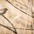 casa · pardal · pássaro · animal · masculino · ramo - foto stock © lightpoet