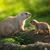 fekete · préri · kutya · szemek · nap · természet - stock fotó © lightpoet