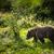 男性 · ヒグマ · 肖像 · 頭 · 動物園 - ストックフォト © lightpoet