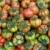 tomaten · markt · display · tabel · Rood · vruchten - stockfoto © lightpoet