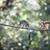 common squirrel monkey saimiri sciureus shallow dof stock photo © lightpoet