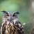 coruja · cabeça · retrato · olhos - foto stock © lightpoet