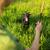 caminhada · cão · vara · companheiro - foto stock © lightpoet