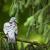 древесины · голубь · дерево - Сток-фото © lightpoet