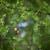 europese · tak · ondiep · veld · natuur · paar - stockfoto © lightpoet