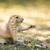 préri · kutya · természet · kő · vicces · fej - stock fotó © lightpoet