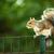eastern grey squirrel sciurus carolinensis stock photo © lightpoet