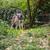 sarkköri · farkas · sarki · kutya · erdő · természet - stock fotó © lightpoet