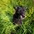 cute black dog in green grass stock photo © lightpoet