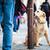 Cute · собака · ждет · городской · улице · печально - Сток-фото © lightpoet
