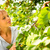 piros · almák · érett · szőlőszüret · gyümölcsös · tele - stock fotó © lightpoet
