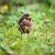 closeup of a baby common blackbird turdus merula stock photo © lightpoet