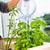 ervas · manjericão · alecrim · mesa · de · madeira · raso · comida - foto stock © lightpoet