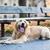 triste · perro · espera · maestro · ocupado · retrato - foto stock © lightpoet