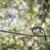 Common Squirrel Monkey (Saimiri sciureus; shallow DOF) stock photo © lightpoet
