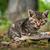 głodny · kotek · spodek · pełny · mleka · żywności - zdjęcia stock © lightpoet
