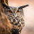 closeup of a eurasian eagle owl bubo bubo stock photo © lightpoet