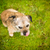 portrait of a cute dog sitting on a green lawn looking up stock photo © lightpoet