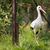 pernas · longas · voar · verde · natureza · cidade · casa - foto stock © lightpoet