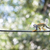 common squirrel monkey saimiri sciureus shallow dof stock photo © lightpoet