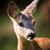 portre · yaz · alan · doğa · güzellik - stok fotoğraf © lightpoet