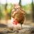 kakas · tyúk · háttér · zöld · állat · szabad - stock fotó © lightpoet