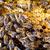 macro · shot · bijen · honingraat · tuin · frame - stockfoto © lightpoet