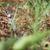 grass snake aka water snake natrix natrix stock photo © lightpoet