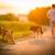 perros · palo · hierba · forestales · diversión - foto stock © lightpoet