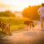 cães · vara · grama · floresta · diversão - foto stock © lightpoet