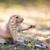 préri · kutya · eszik · torony · park · Wyoming - stock fotó © lightpoet