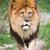 женщины · африканских · белый · лев · природного - Сток-фото © lightpoet