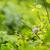 casa · pardal · feminino · sessão · galho · jardim - foto stock © lightpoet