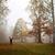orman · güzel · yeşil · yumuşak · odak - stok fotoğraf © limbi007
