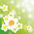 easter card background big white flowers stock photo © limbi007