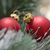 Рождества · красный · соснового · дерево - Сток-фото © limpido