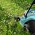 газона · электрических · работает · зеленый · работу · саду - Сток-фото © limpido