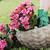 садоводства · банка · почвы · завода · цветы · саду - Сток-фото © limpido