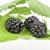 влажный · листьев · белый · продовольствие · зеленый - Сток-фото © limpido