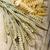 orecchie · grano · isolato · natura · impianto - foto d'archivio © limpido