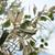 оливкового · зрелый · оливками · подвесной · лет · зеленый - Сток-фото © limpido