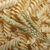 ушки · пшеницы · пасты · кукурузы · семени · зерна - Сток-фото © limpido
