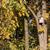 najaar · landschap · boom · kleurrijk · blad · vogel - stockfoto © linfernum