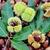 taze · yaprak · meyve · sonbahar · kabuk · düşmek - stok fotoğraf © Lio22