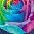 rainbow rose card dark stock photo © lisashu