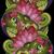 いたずら書き · 花 · セット · デザイン - ストックフォト © lissantee