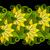 karalama · çiçekler · ayarlamak · renkli · dizayn - stok fotoğraf © lissantee