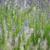 kokulu · doğa · sağlık · beyaz · lavanta · mor - stok fotoğraf © listvan
